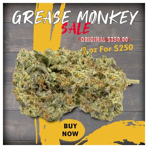 Buy Grease Monkey Cannabis Strain Online