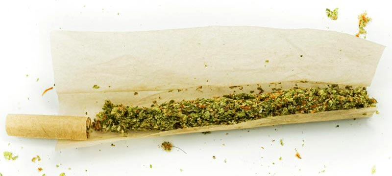 weed inside of a rolling paper with a filter | unrolled joint