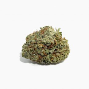 Scoutmaster-strain