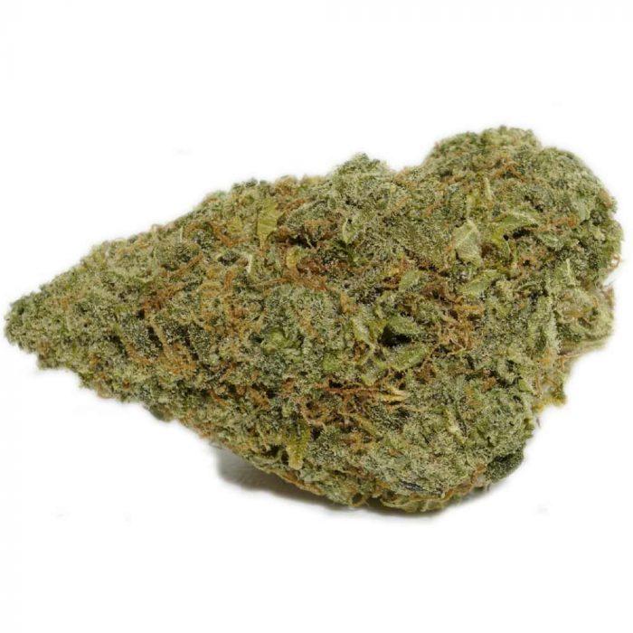 mimosa strain