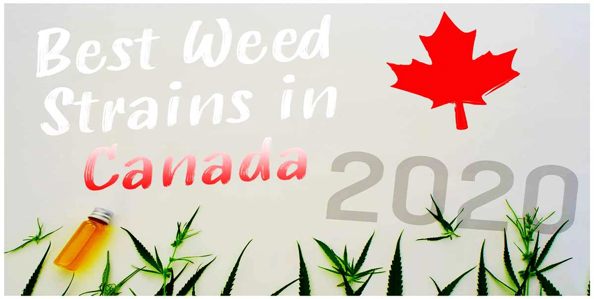 best weed strains in canada 2020 1190x600