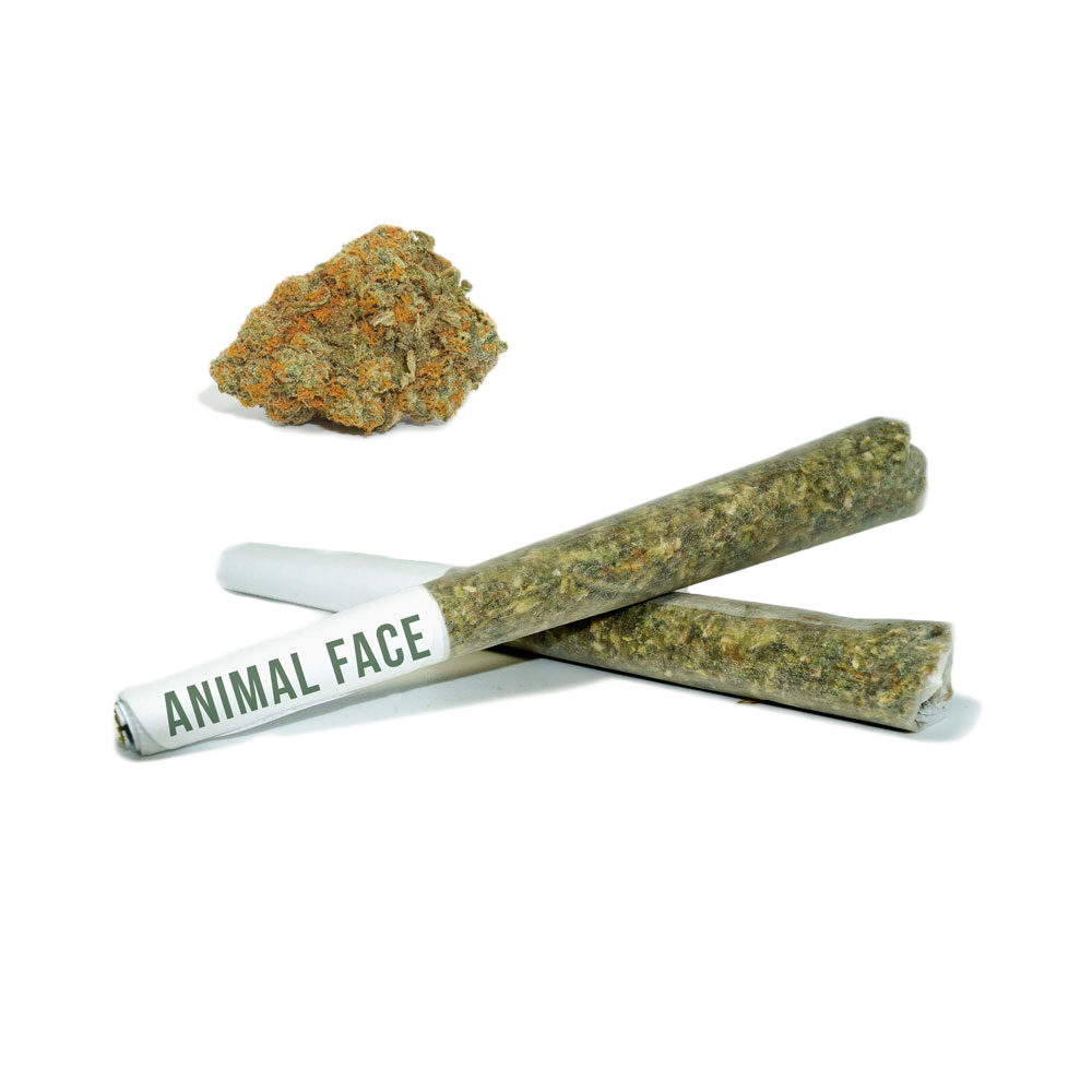 Pre Roll Animal Face