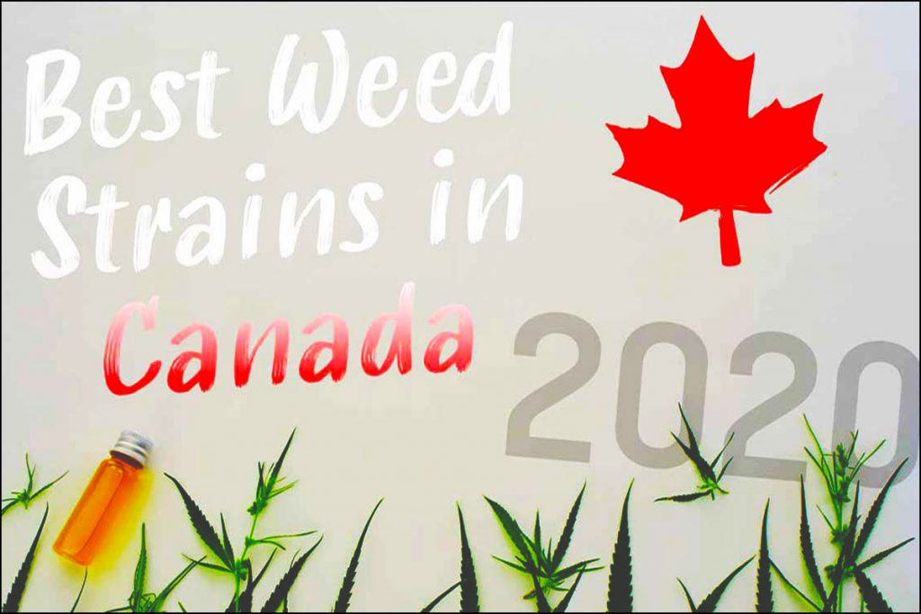 best weed strains in canada 2020