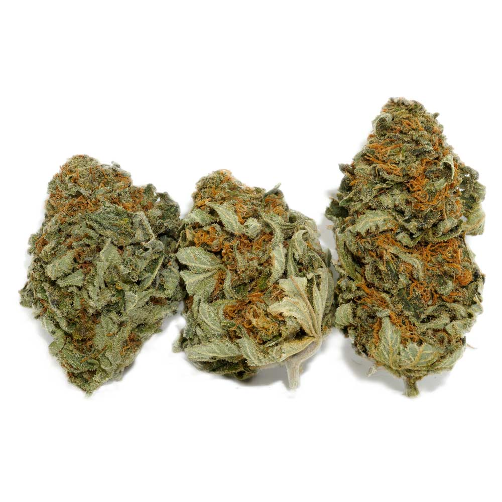Buy Master Kush Weed | Wholesale Cannabis Canada