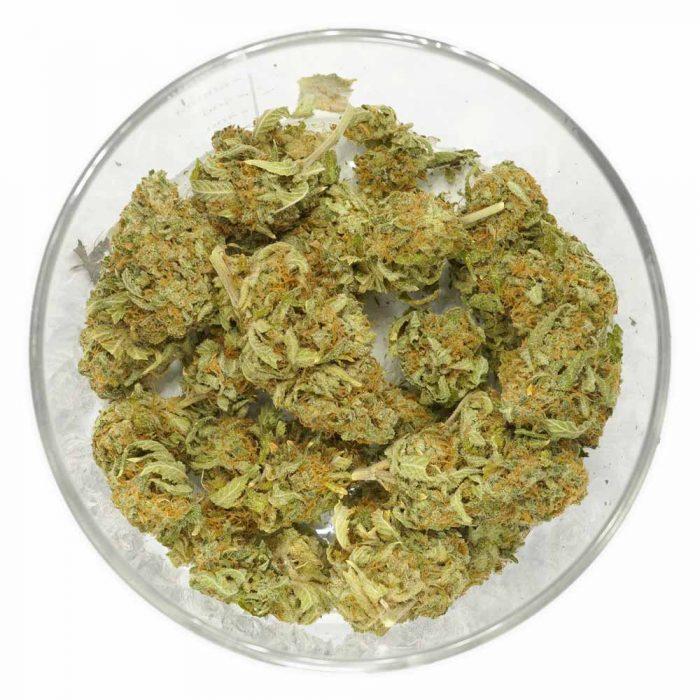 Bulk-Comatose-Weed