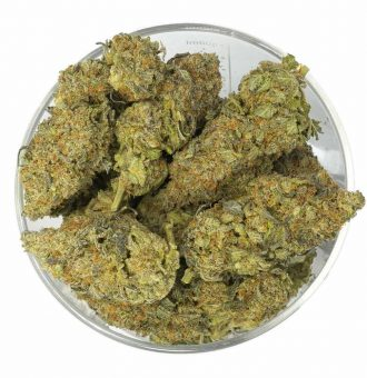 Buy Critical Mass Weed in Bulk