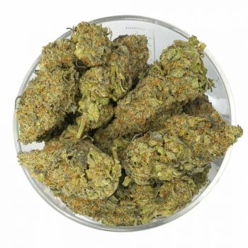 Buy Critical Mass Weed in Bulk