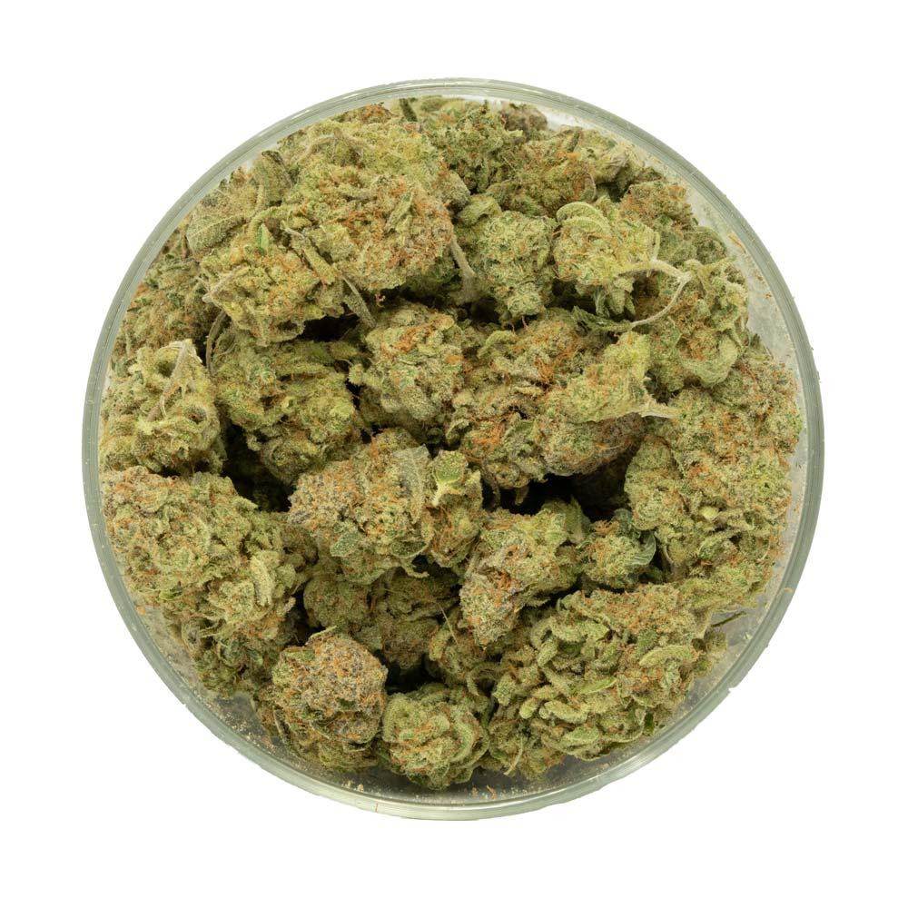 Zombie Kush Marijuana Buds