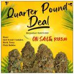 Quarter Pound Deal 700x700