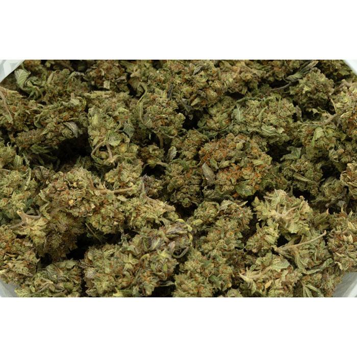 Critical-Kush-Marijuana-Buds