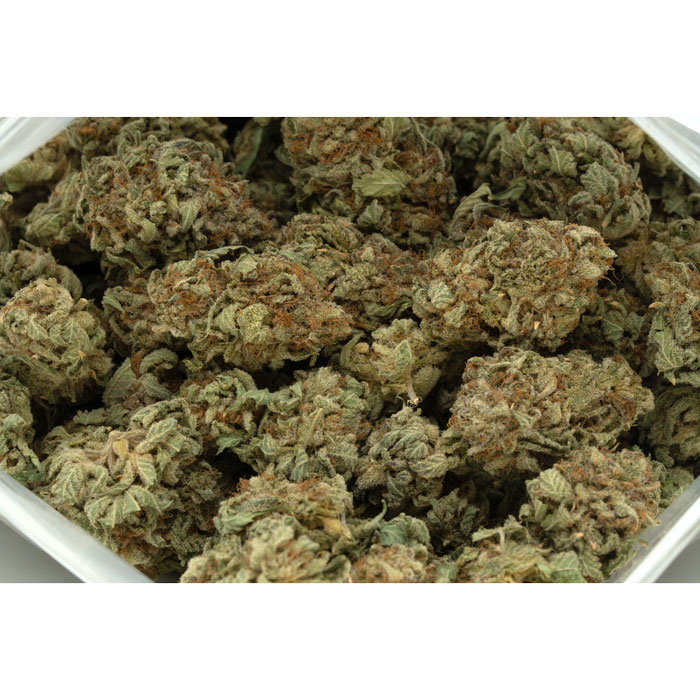 Gorilla-Cookies-Marijuana-Buds-2